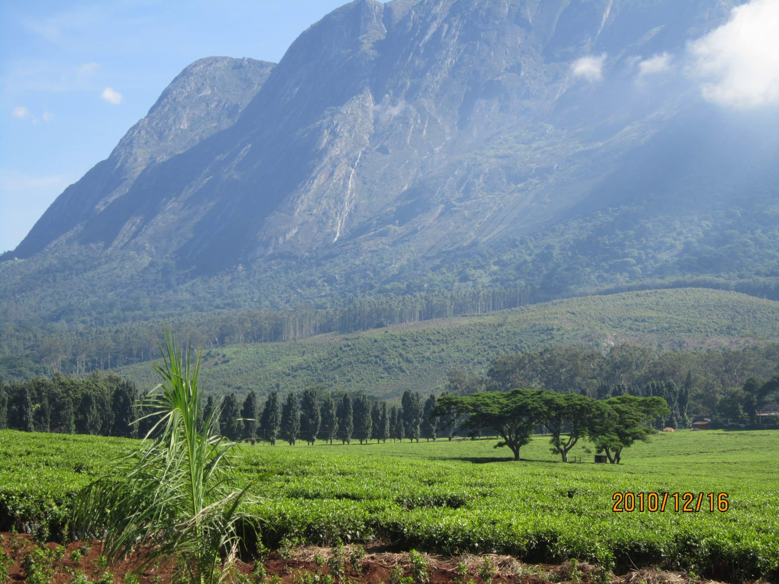 Mulanje Mountain Forest Reserve