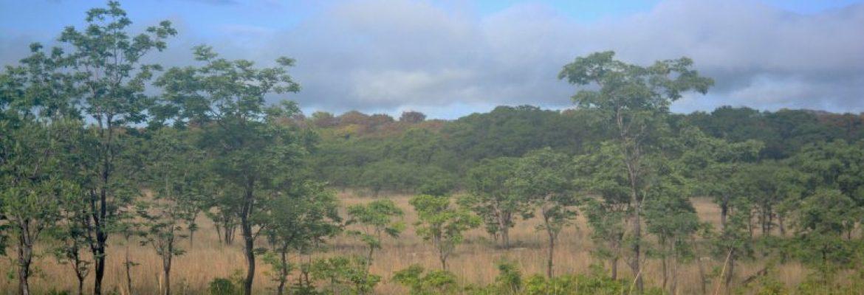 Bicuar National Park