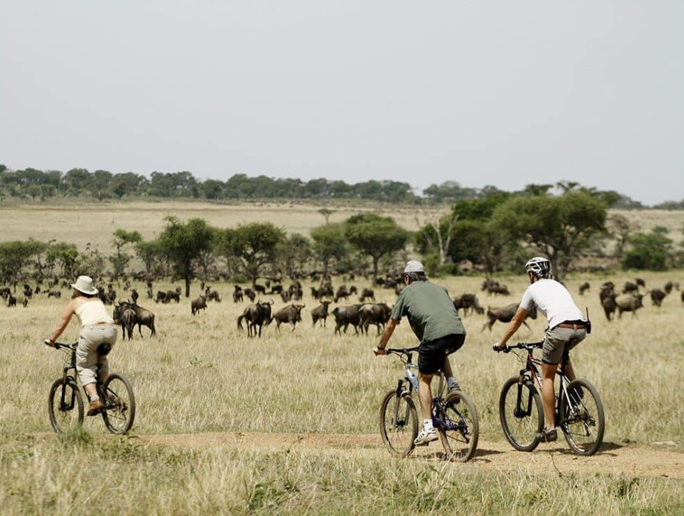 Cycling Safari