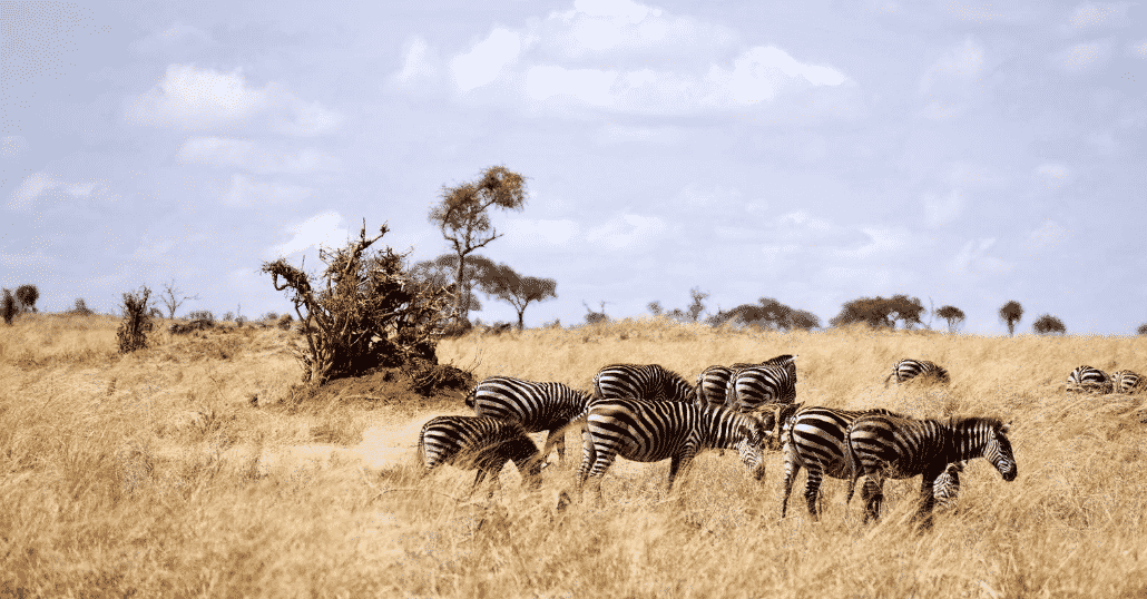 Top 10 Reasons to Visit Tanzania