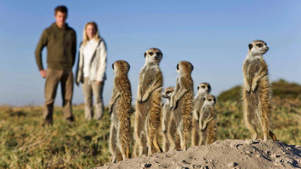 other safaris