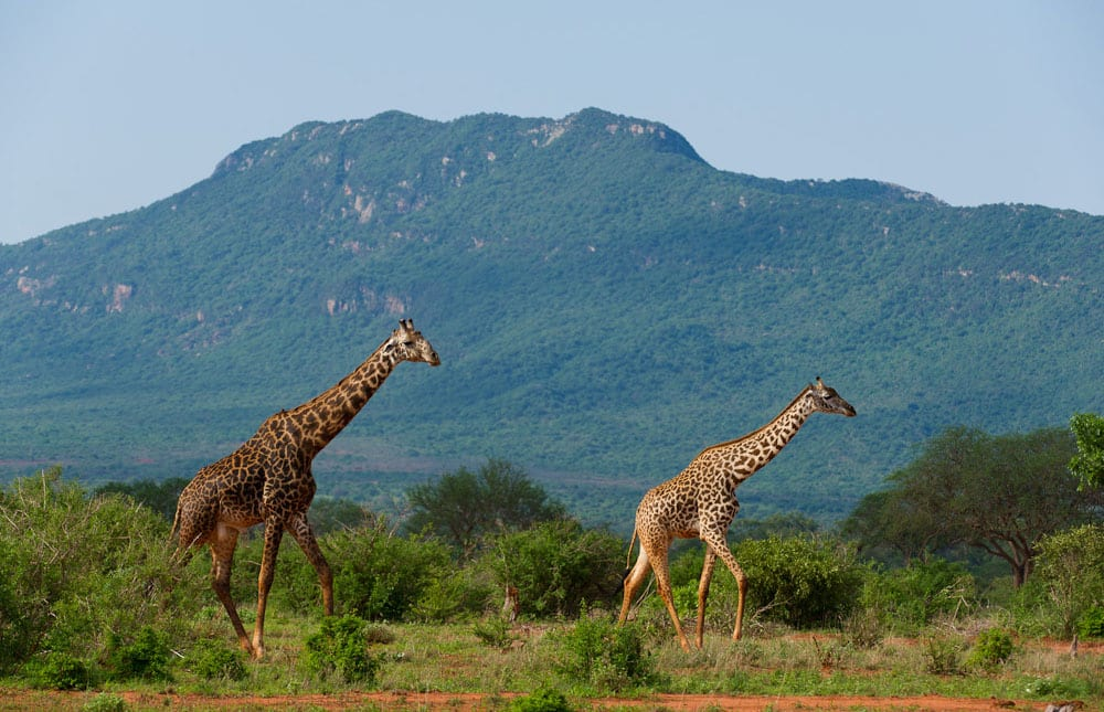 Tsavo National Parks