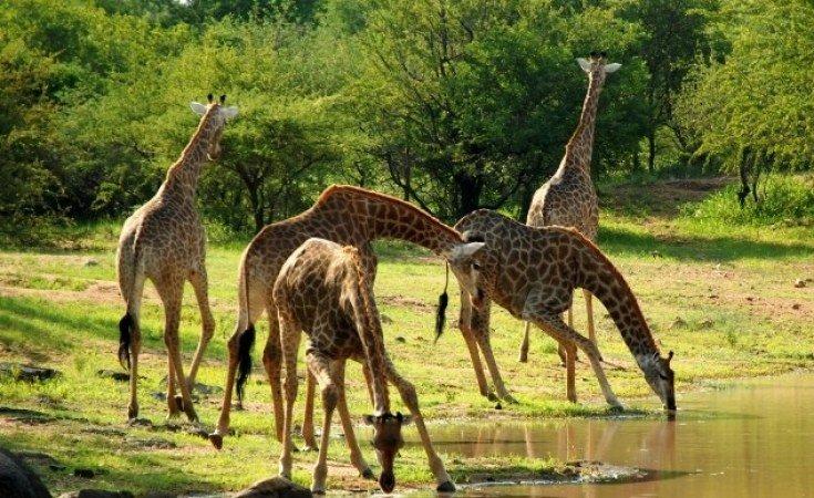 Moyowosi Game Reserve
