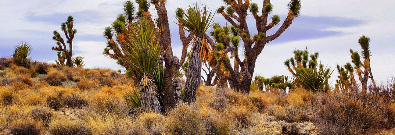 El Omayed Biosphere Reserve