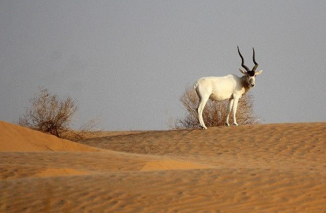 Jebil National Park