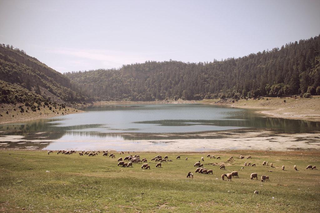 Khenifra National Park