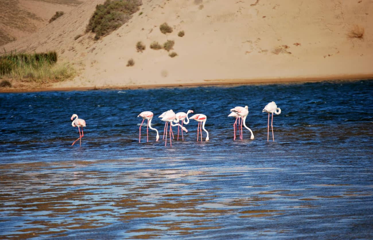 Souss-Massa National Park