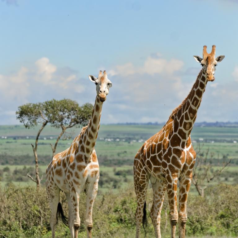 best safari parks in kenya