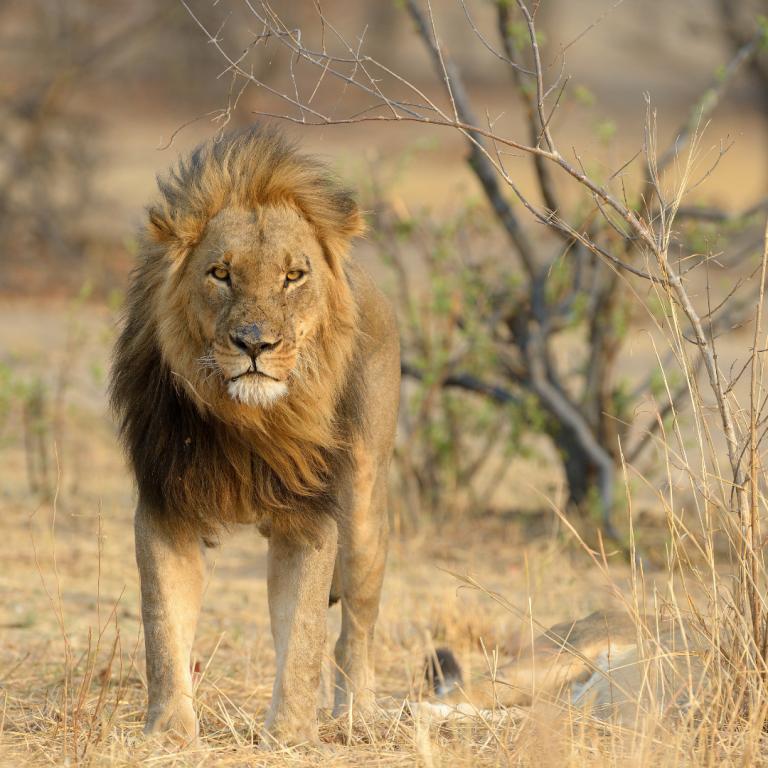 best safari parks in zimbabwe