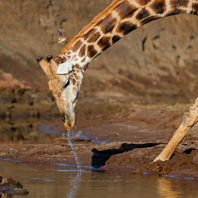 best safari parks in botswana