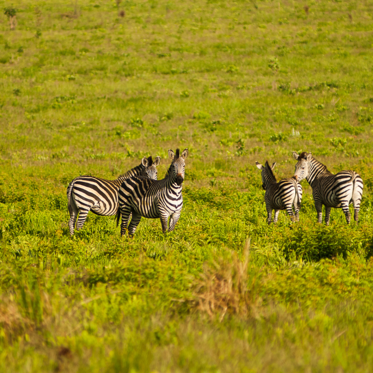 best safari parks in drc