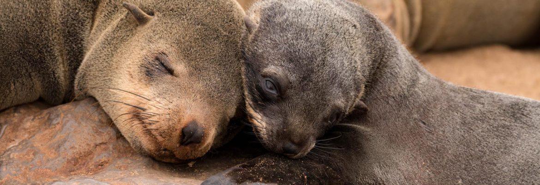 Cape Cross Seal Reserve