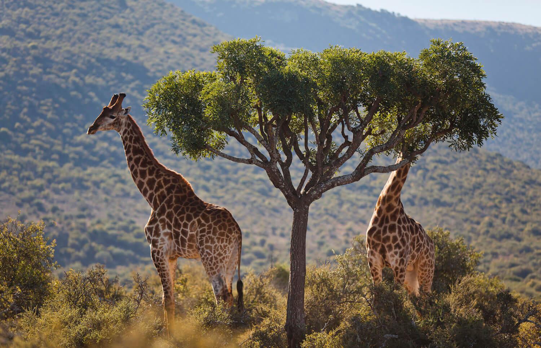 Samara Private Game Reserve