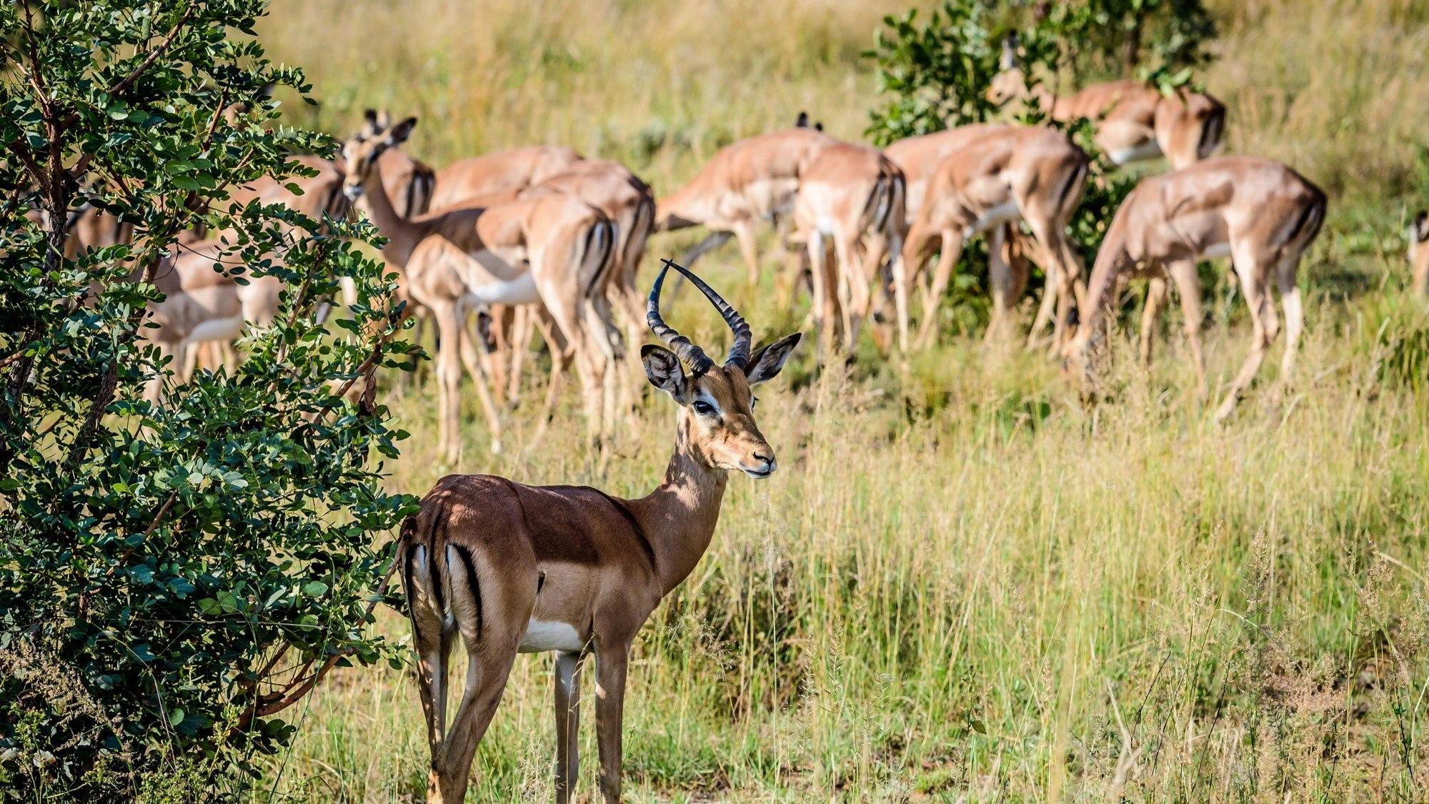 Shambala Private Game Reserve