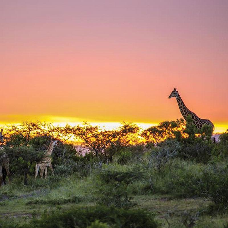 Thula Thula Private Game Reserve