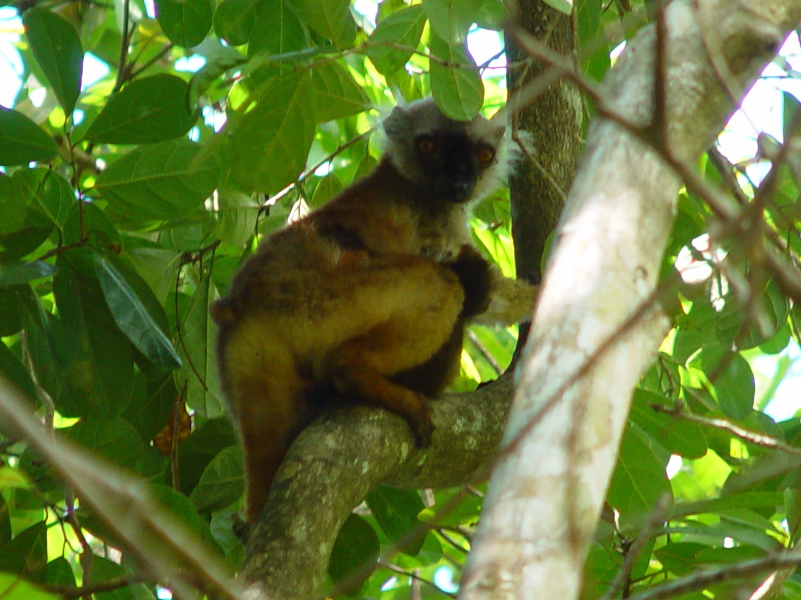 Lokobe National Park